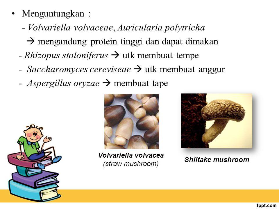 Menguntungkan : - Volvariella volvaceae, Auricularia polytricha  mengandung protein tinggi dan dapat dimakan - Rhizopus stoloniferus  utk membuat te