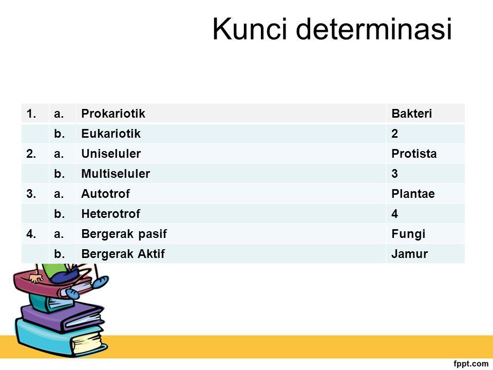 Kunci determinasi 1.a.ProkariotikBakteri b.Eukariotik2 2.a.UniselulerProtista b.Multiseluler3 3.a.AutotrofPlantae b.Heterotrof4 4.a.Bergerak pasifFung