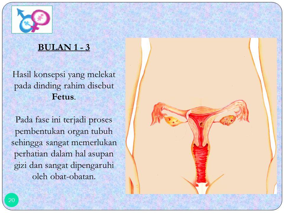 19 Selanjutnya terlihat proses terbenamnya hasil konsepsi pada dinding rahim.