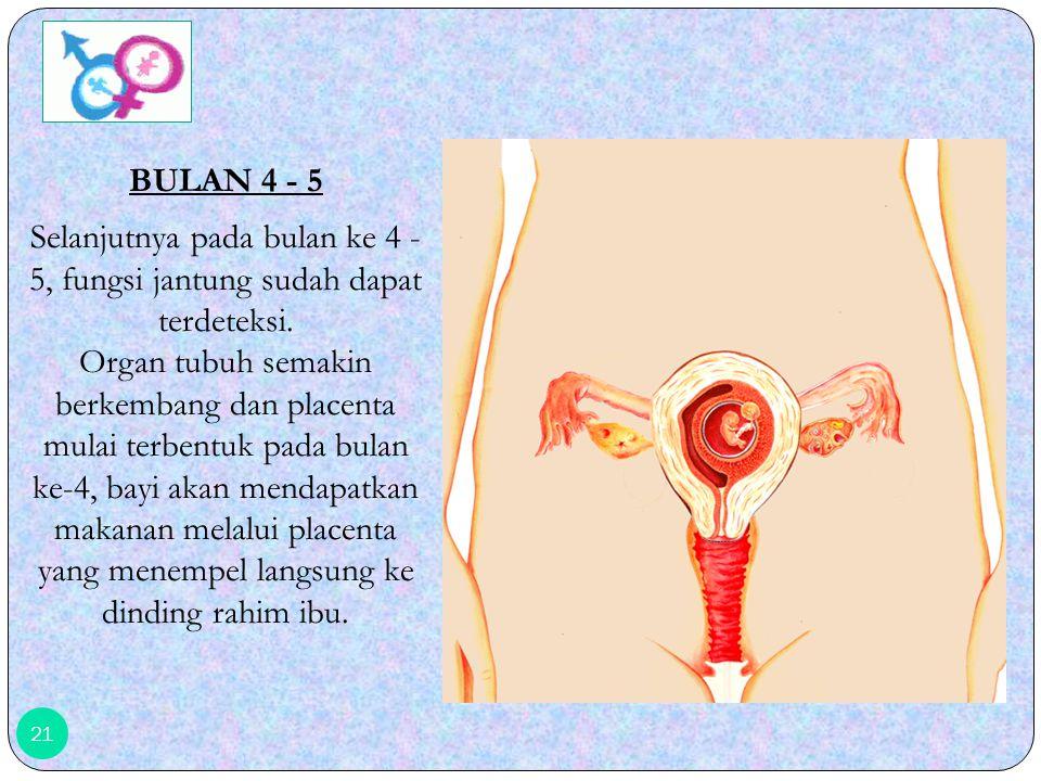 20 BULAN 1 - 3 Hasil konsepsi yang melekat pada dinding rahim disebut Fetus. Pada fase ini terjadi proses pembentukan organ tubuh sehingga sangat meme