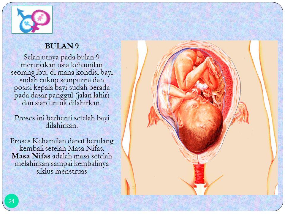 23 BULAN 8 Selanjutnya pada bulan ke 8, Organ tubuh janin semakin berkembang, meskipun belum sempurna.