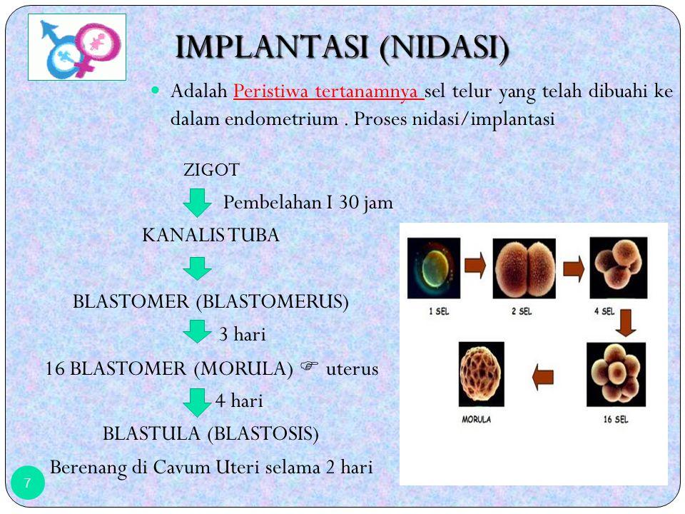 ZIGOT Pembelahan I 30 jam KANALIS TUBA BLASTOMER (BLASTOMERUS) 3 hari 16 BLASTOMER (MORULA)  uterus 4 hari BLASTULA (BLASTOSIS) Berenang di Cavum Uteri selama 2 hari 7 IMPLANTASI (NIDASI) Adalah Peristiwa tertanamnya sel telur yang telah dibuahi ke dalam endometrium.