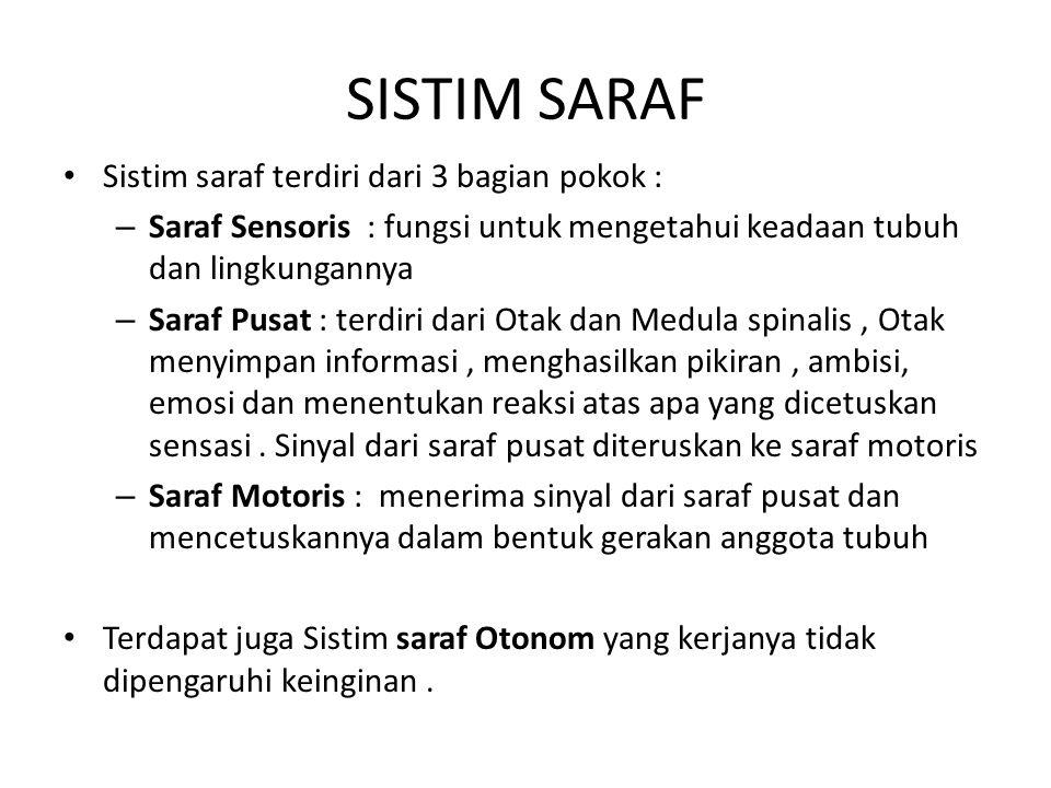 SISTIM SARAF Sistim saraf terdiri dari 3 bagian pokok : – Saraf Sensoris : fungsi untuk mengetahui keadaan tubuh dan lingkungannya – Saraf Pusat : ter