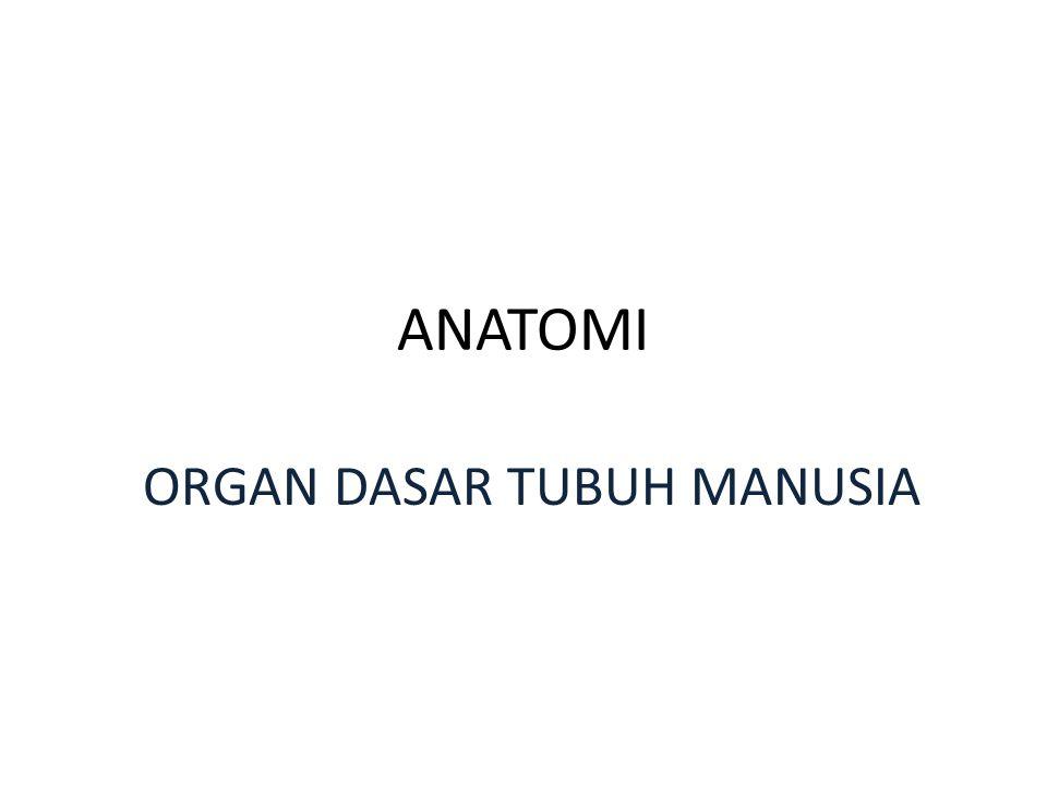 ANATOMI ORGAN DASAR TUBUH MANUSIA