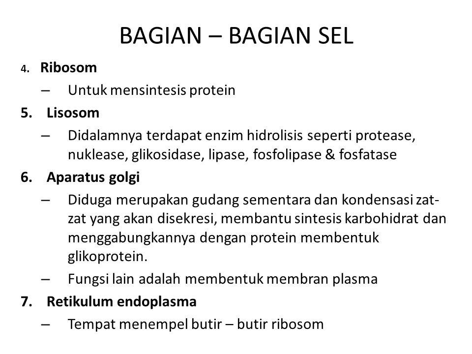 BAGIAN – BAGIAN SEL 4. Ribosom – Untuk mensintesis protein 5. Lisosom – Didalamnya terdapat enzim hidrolisis seperti protease, nuklease, glikosidase,