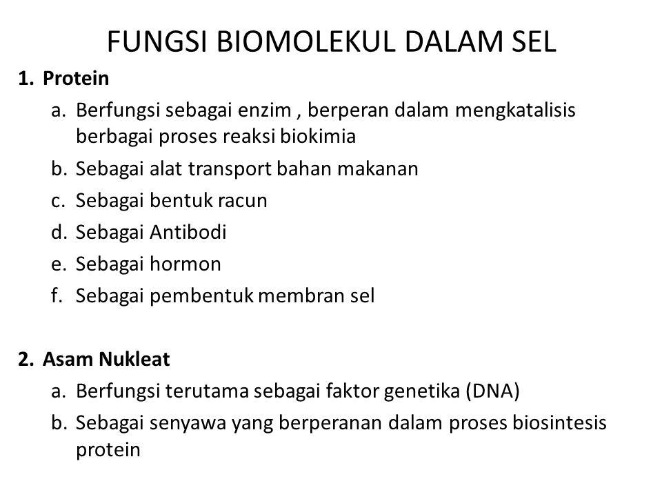 FUNGSI BIOMOLEKUL DALAM SEL 1.Protein a.Berfungsi sebagai enzim, berperan dalam mengkatalisis berbagai proses reaksi biokimia b.Sebagai alat transport