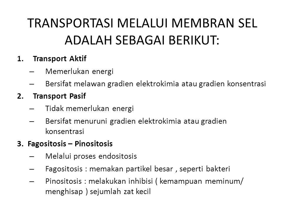 TRANSPORTASI MELALUI MEMBRAN SEL ADALAH SEBAGAI BERIKUT: 1.Transport Aktif – Memerlukan energi – Bersifat melawan gradien elektrokimia atau gradien ko