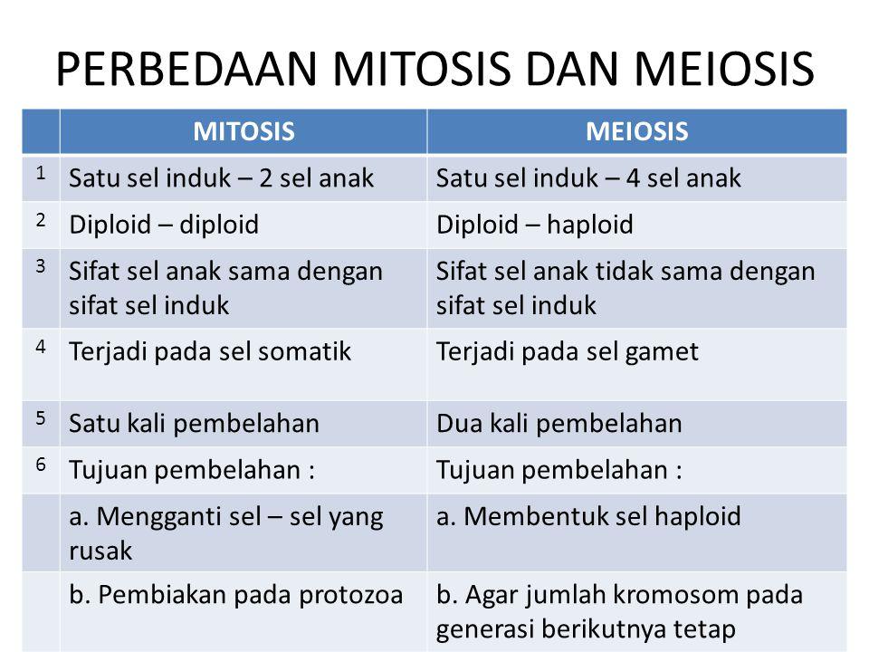 PERBEDAAN MITOSIS DAN MEIOSIS MITOSISMEIOSIS 1 Satu sel induk – 2 sel anakSatu sel induk – 4 sel anak 2 Diploid – diploidDiploid – haploid 3 Sifat sel