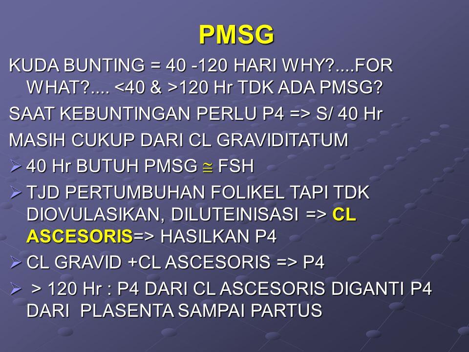 PMSG KUDA BUNTING = 40 -120 HARI WHY?....FOR WHAT?....