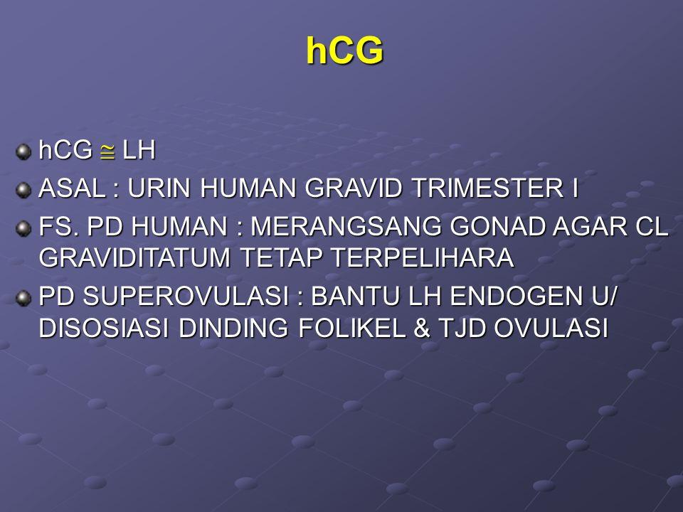 hCG hCG  LH ASAL : URIN HUMAN GRAVID TRIMESTER I FS.