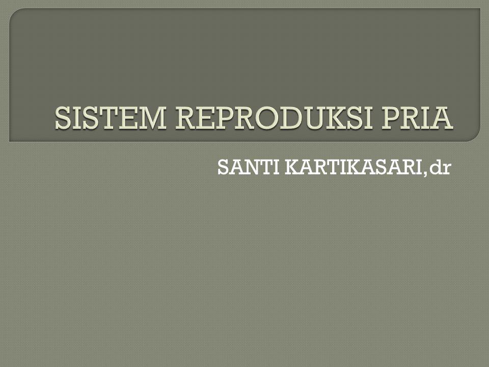  Kriptorkidisme Kriptorkidisme adalah kegagalan dari satu atau kedua testis untuk turun dari rongga abdomen ke dalam skrotum pada waktu bayi.
