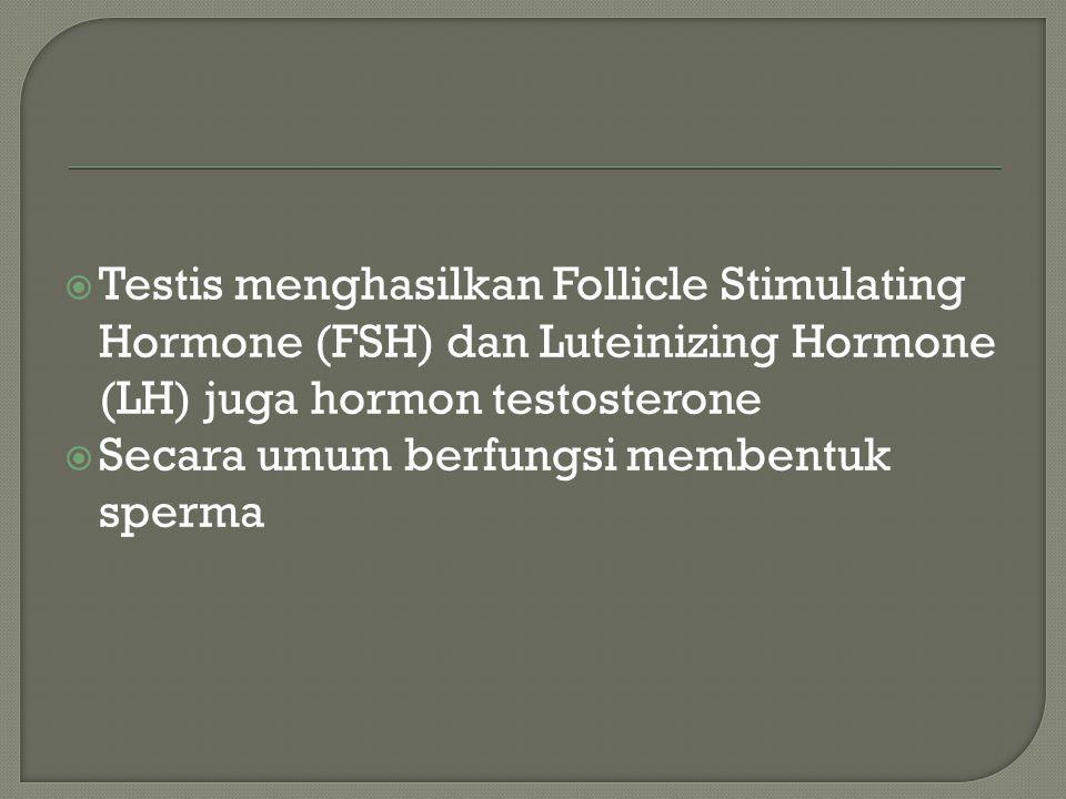  Testis menghasilkan Follicle Stimulating Hormone (FSH) dan Luteinizing Hormone (LH) juga hormon testosterone  Secara umum berfungsi membentuk sperm