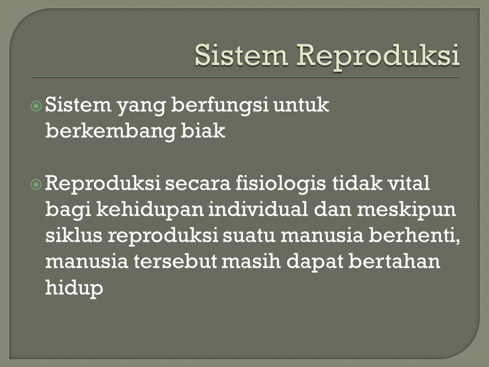  Sistem yang berfungsi untuk berkembang biak  Reproduksi secara fisiologis tidak vital bagi kehidupan individual dan meskipun siklus reproduksi suat