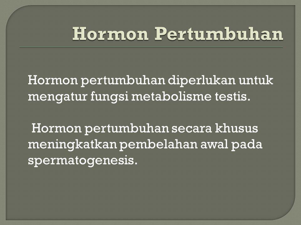 Hormon pertumbuhan diperlukan untuk mengatur fungsi metabolisme testis. Hormon pertumbuhan secara khusus meningkatkan pembelahan awal pada spermatogen