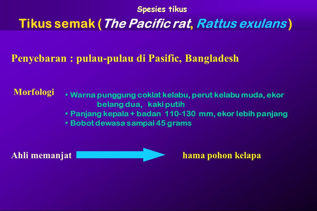 Spesies tikus Tikus semak (The Pacific rat, Rattus exulans ) Ahli memanjat Penyebaran : pulau-pulau di Pasific, Bangladesh Morfologi Warna punggung co