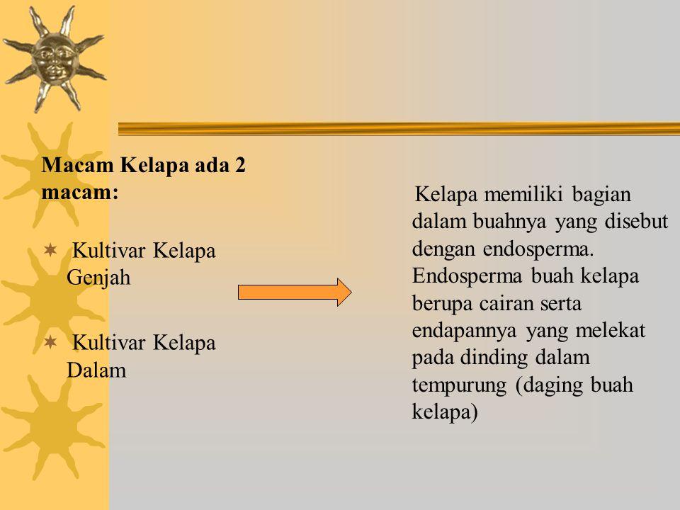 Macam Kelapa ada 2 macam:  Kultivar Kelapa Genjah  Kultivar Kelapa Dalam Kelapa memiliki bagian dalam buahnya yang disebut dengan endosperma. Endosp
