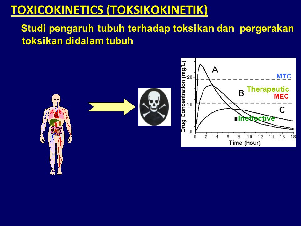 TOXICOKINETICS (TOKSIKOKINETIK) Studi pengaruh tubuh terhadap toksikan dan pergerakan toksikan didalam tubuh MTC Therapeutic MEC Ineffective