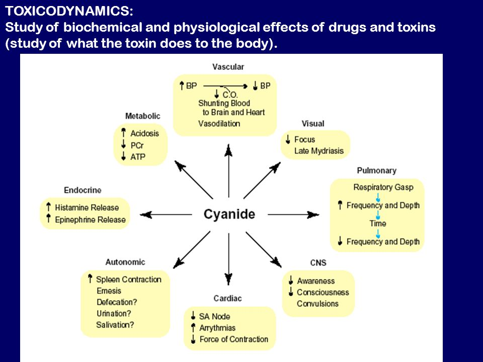 TOXICODYNAMICS: Study of biochemical and physiological effects of drugs and toxins (study of what the toxin does to the body).