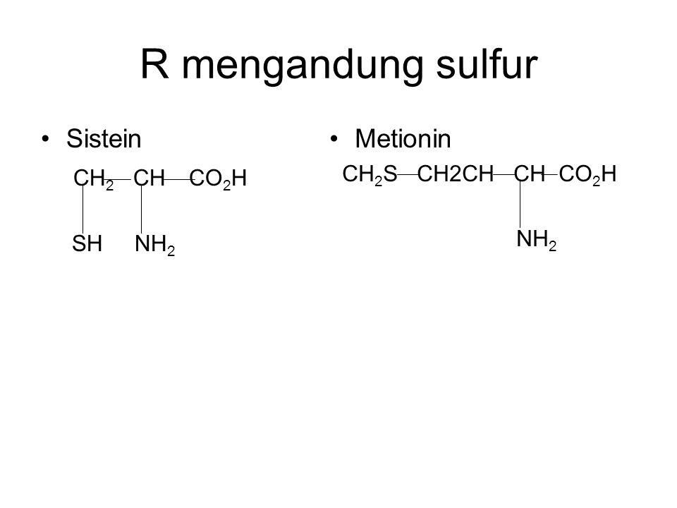 R mengandung sulfur Sistein CH 2 CH CO 2 H SH NH 2 Metionin CH 2 S CH2CH CH CO 2 H NH 2