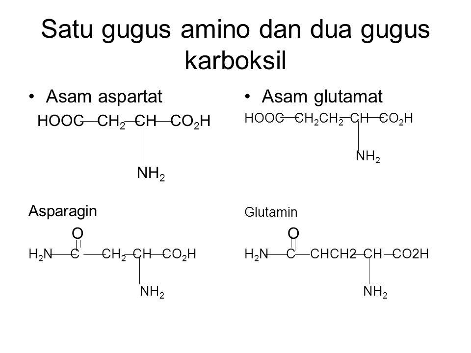 Satu gugus amino dan dua gugus karboksil Asam aspartat HOOC CH 2 CH CO 2 H NH 2 Asparagin O H 2 N C CH 2 CH CO 2 H NH 2 Asam glutamat HOOC CH 2 CH 2 C