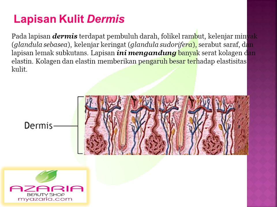 Epidermis tersusun dari stratum germinativum, stratum granulosum, dan stratum corneum. Pada lapisan ari terdapat lapisan sel keratinosit yang berperan