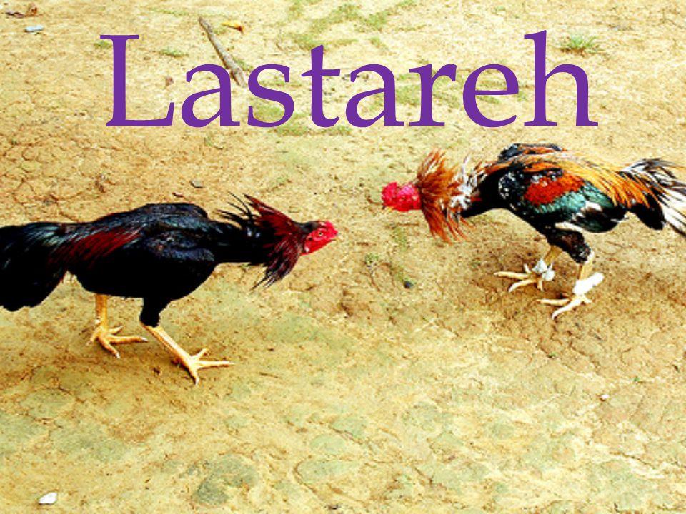 Lastareh