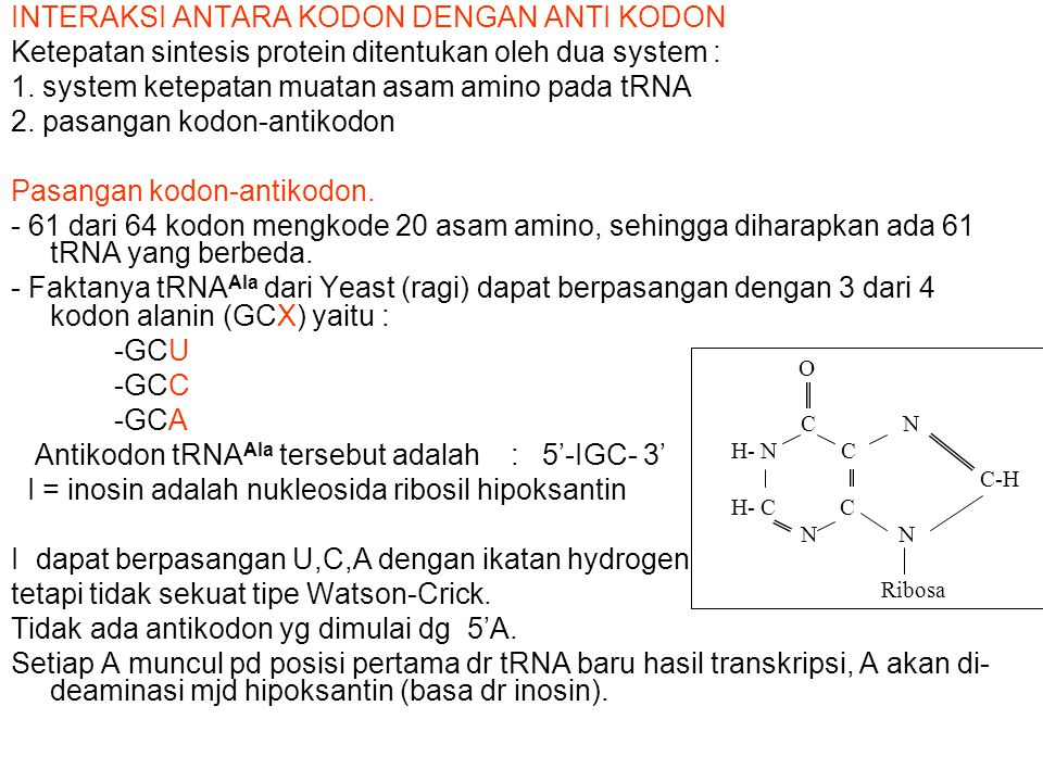INTERAKSI ANTARA KODON DENGAN ANTI KODON Ketepatan sintesis protein ditentukan oleh dua system : 1. system ketepatan muatan asam amino pada tRNA 2. pa