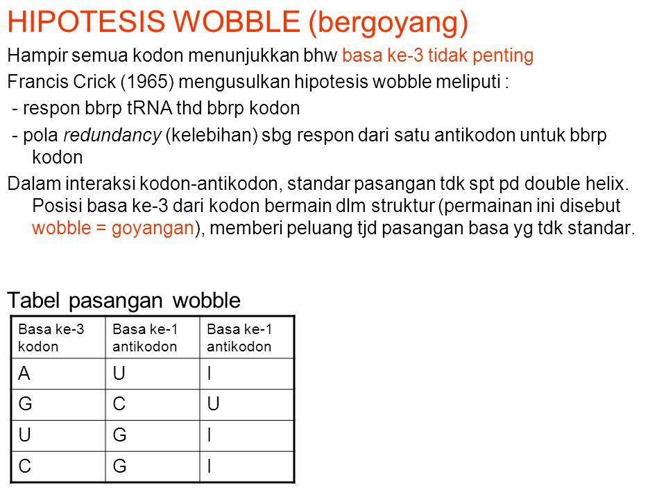 HIPOTESIS WOBBLE (bergoyang) Hampir semua kodon menunjukkan bhw basa ke-3 tidak penting Francis Crick (1965) mengusulkan hipotesis wobble meliputi : -