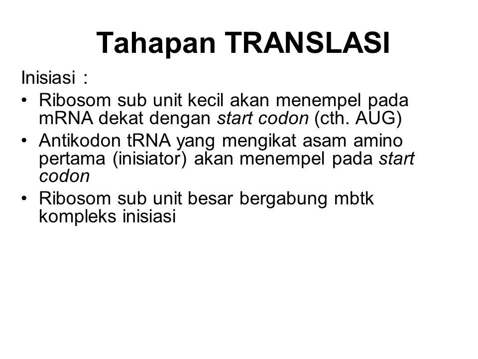 Tahapan TRANSLASI Inisiasi : Ribosom sub unit kecil akan menempel pada mRNA dekat dengan start codon (cth. AUG) Antikodon tRNA yang mengikat asam amin