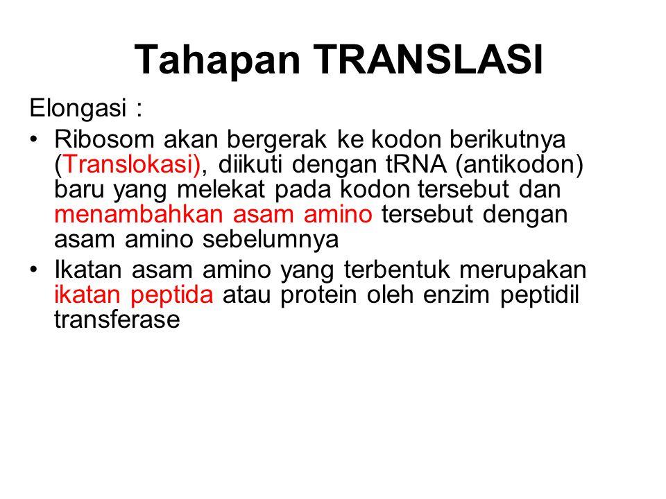 Tahapan TRANSLASI Elongasi : Ribosom akan bergerak ke kodon berikutnya (Translokasi), diikuti dengan tRNA (antikodon) baru yang melekat pada kodon ter
