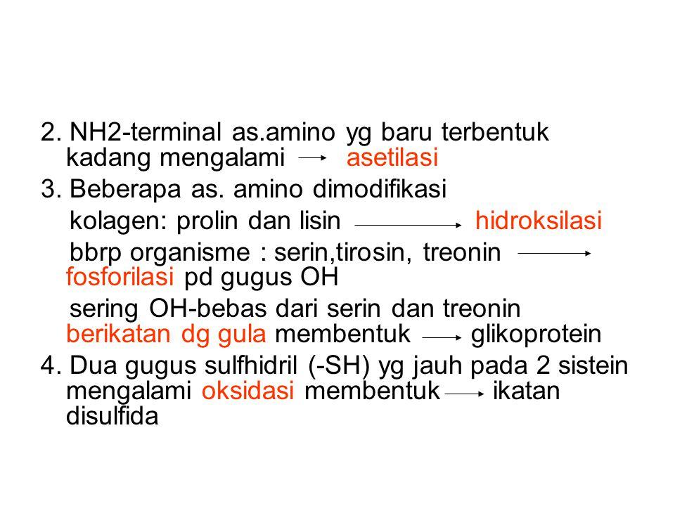 2. NH2-terminal as.amino yg baru terbentuk kadang mengalami asetilasi 3. Beberapa as. amino dimodifikasi kolagen: prolin dan lisin hidroksilasi bbrp o