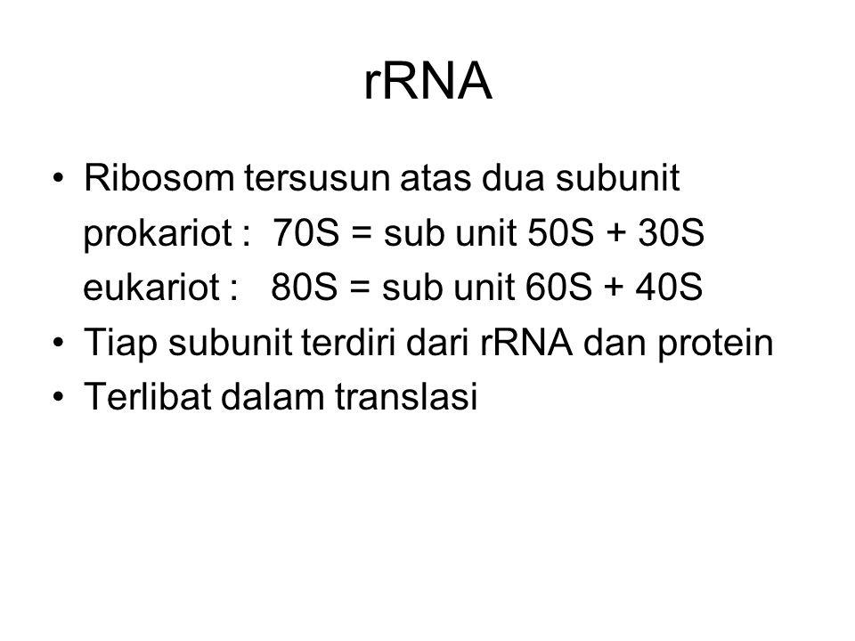 rRNA Ribosom tersusun atas dua subunit prokariot : 70S = sub unit 50S + 30S eukariot : 80S = sub unit 60S + 40S Tiap subunit terdiri dari rRNA dan pro