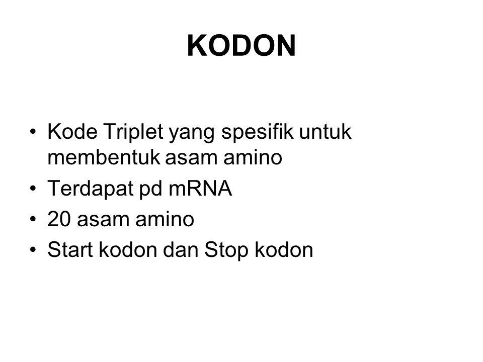 KODON Kode Triplet yang spesifik untuk membentuk asam amino Terdapat pd mRNA 20 asam amino Start kodon dan Stop kodon