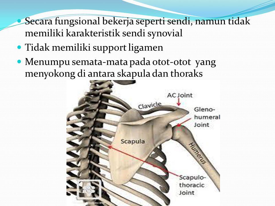 Secara fungsional bekerja seperti sendi, namun tidak memiliki karakteristik sendi synovial Tidak memiliki support ligamen Menumpu semata-mata pada oto