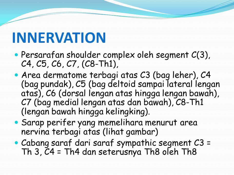 INNERVATION Persarafan shoulder complex oleh segment C(3), C4, C5, C6, C7, (C8-Th1), Area dermatome terbagi atas C3 (bag leher), C4 (bag pundak), C5 (bag deltoid sampai lateral lengan atas), C6 (dorsal lengan atas hingga lengan bawah), C7 (bag medial lengan atas dan bawah), C8-Th1 (lengan bawah hingga kelingking).