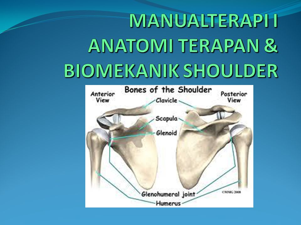 Dibentuk oleh: Greater tuberosity of the humeral head, inferiorly Coracoid process, anteromedially Coracoacromialarch, superiorly
