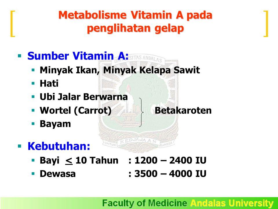 Metabolisme Vitamin A pada penglihatan gelap  Sumber Vitamin A:  Minyak Ikan, Minyak Kelapa Sawit  Hati  Ubi Jalar Berwarna  Wortel (Carrot) Betakaroten  Bayam  Kebutuhan:  Bayi < 10 Tahun : 1200 – 2400 IU  Dewasa : 3500 – 4000 IU