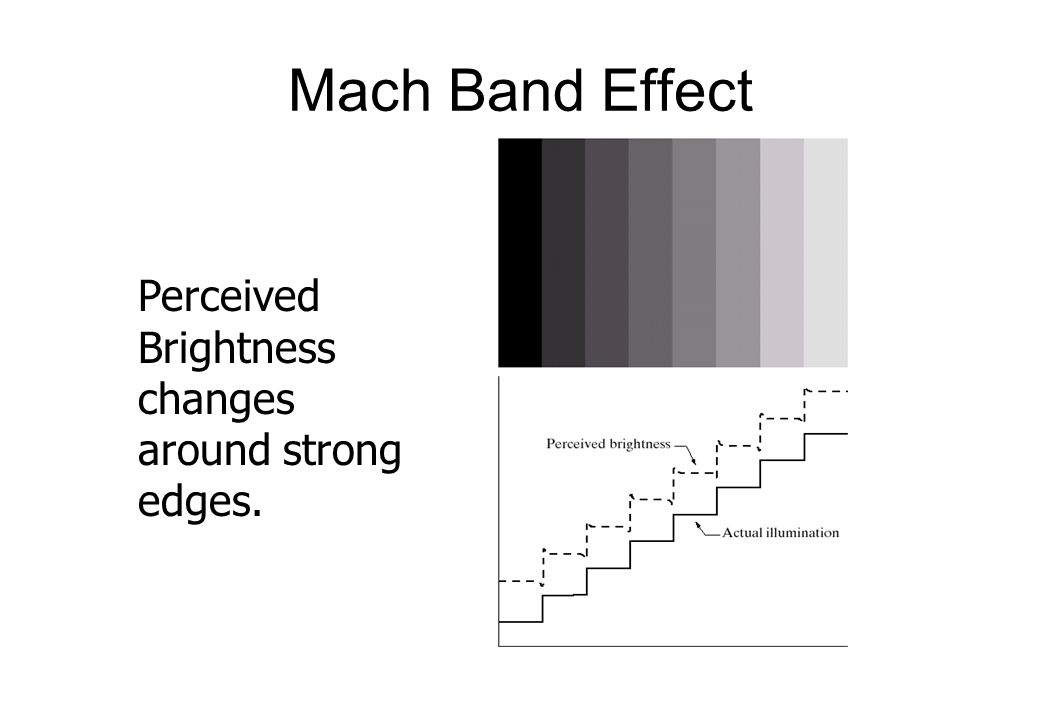 Mach Band Effect Perceived Brightness changes around strong edges.