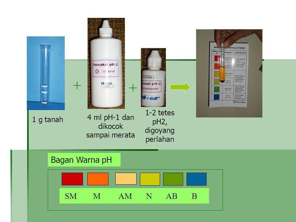 1 g tanah + 1-2 tetes pH2, digoyang perlahan + pH-1 4 ml pH-1 dan dikocok sampai merata Bagan Warna pH SM M AM N AB B