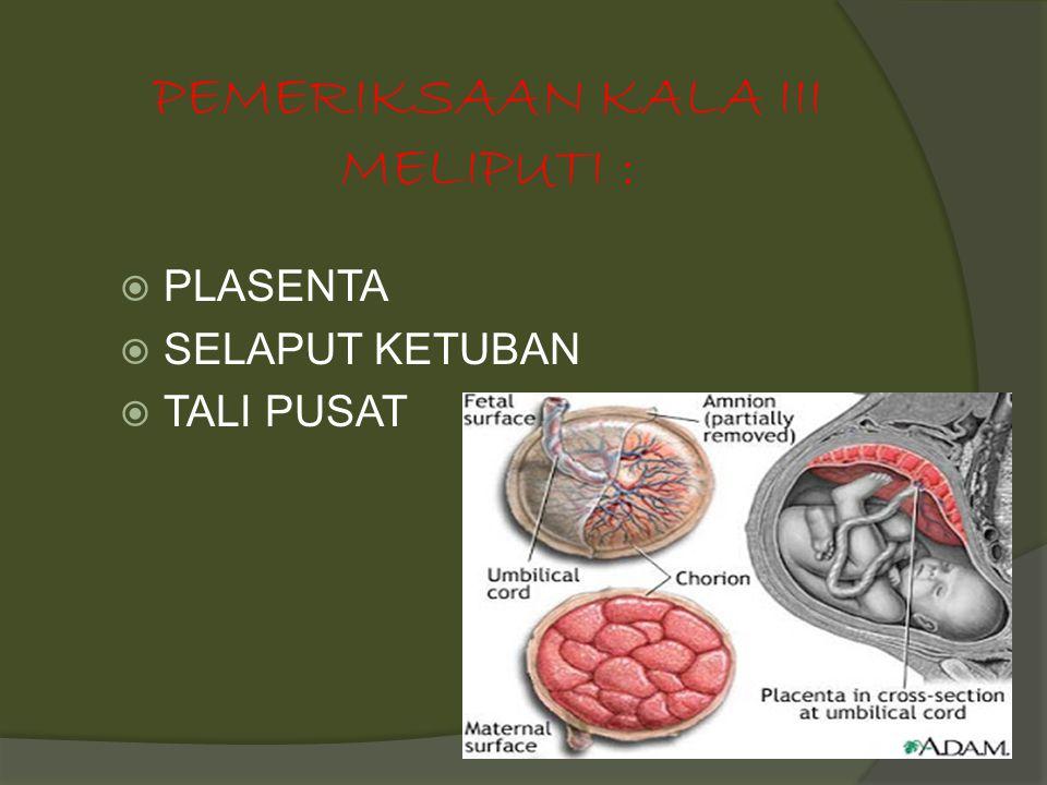 PEMERIKSAAN KALA III MELIPUTI :  PLASENTA  SELAPUT KETUBAN  TALI PUSAT