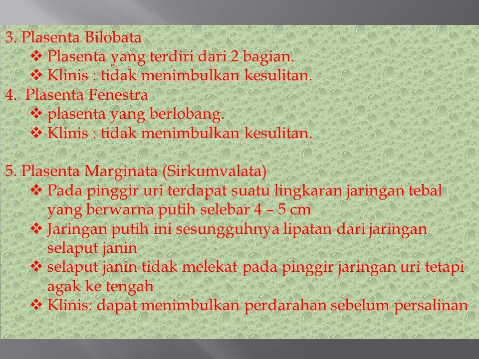 3.Plasenta Bilobata  Plasenta yang terdiri dari 2 bagian.