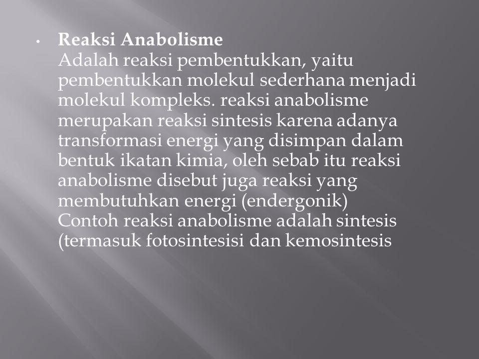 Reaksi Anabolisme Adalah reaksi pembentukkan, yaitu pembentukkan molekul sederhana menjadi molekul kompleks. reaksi anabolisme merupakan reaksi sintes