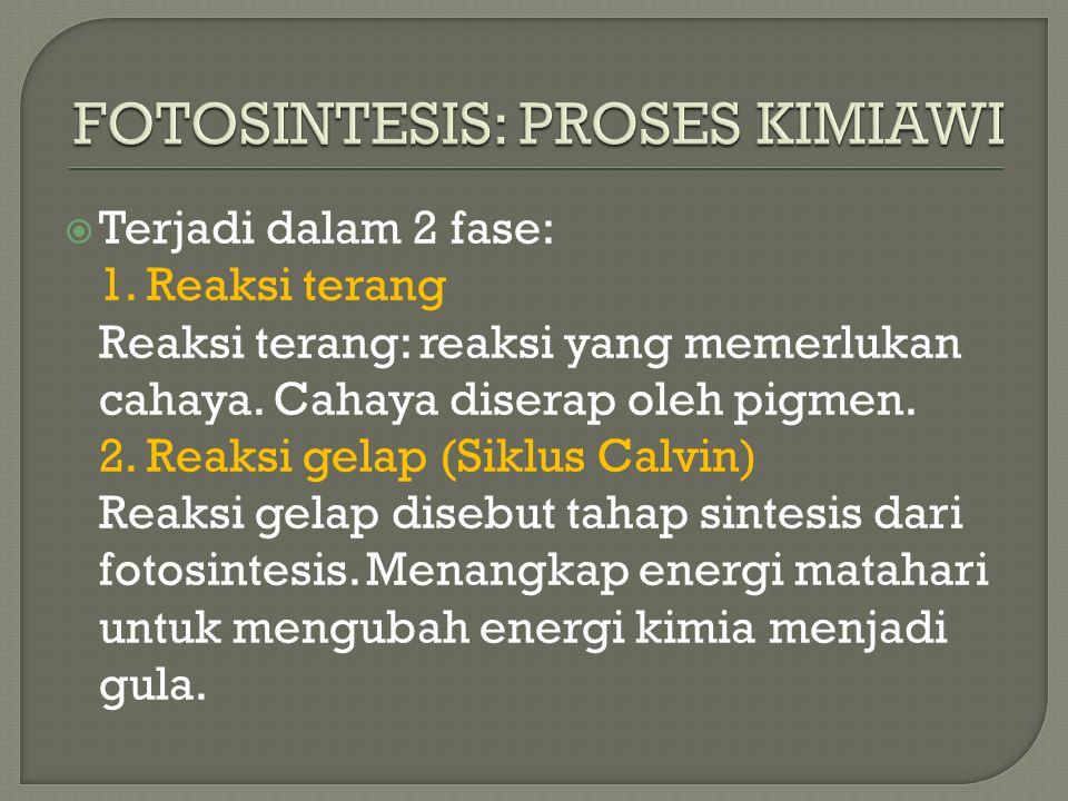  Terjadi dalam 2 fase: 1. Reaksi terang Reaksi terang: reaksi yang memerlukan cahaya. Cahaya diserap oleh pigmen. 2. Reaksi gelap (Siklus Calvin) Rea