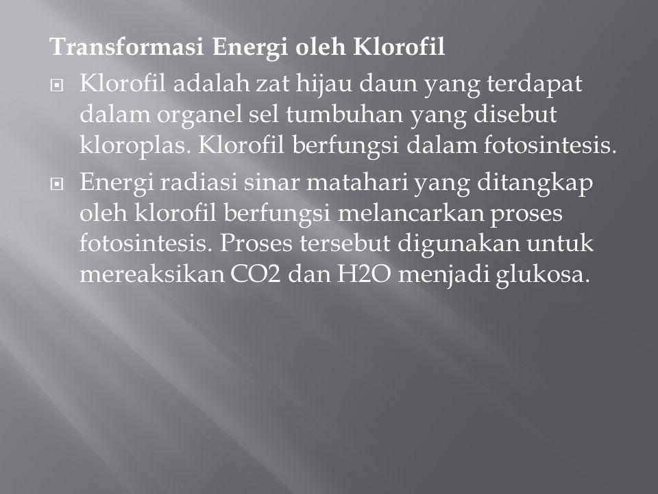 Transformasi Energi oleh Klorofil  Klorofil adalah zat hijau daun yang terdapat dalam organel sel tumbuhan yang disebut kloroplas. Klorofil berfungsi