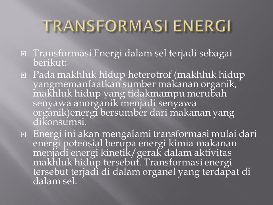  Transformasi Energi dalam sel terjadi sebagai berikut:  Pada makhluk hidup heterotrof (makhluk hidup yangmemanfaatkan sumber makanan organik, makhl