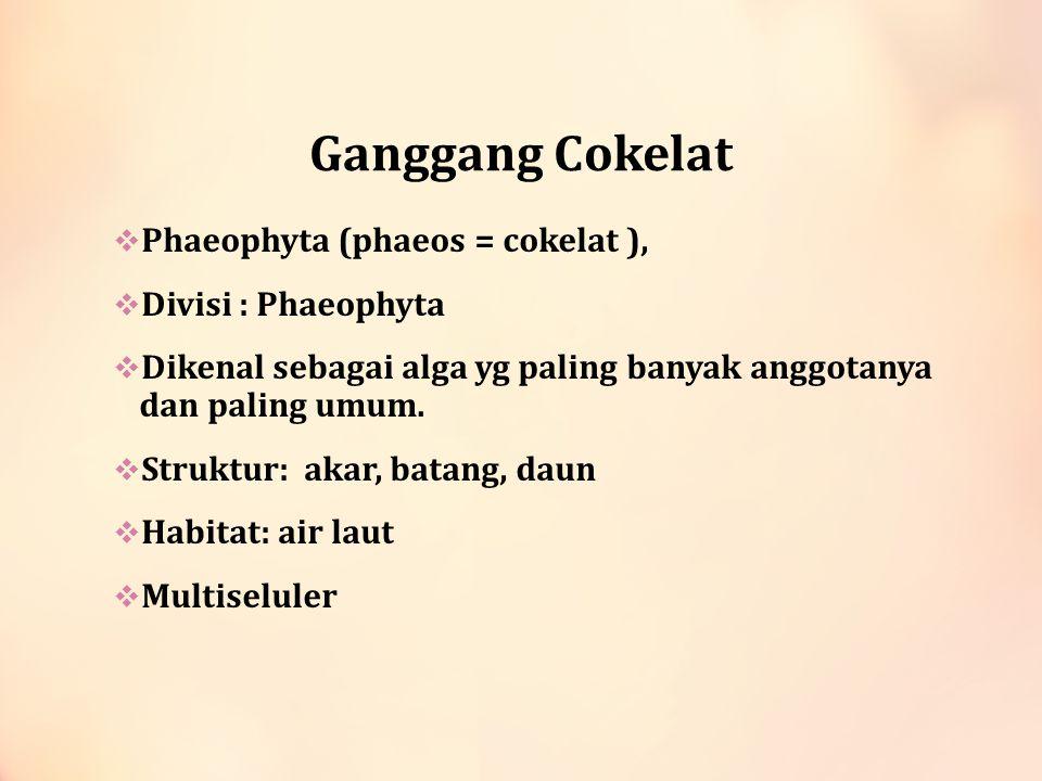 Ganggang Cokelat  Phaeophyta (phaeos = cokelat ),  Divisi : Phaeophyta  Dikenal sebagai alga yg paling banyak anggotanya dan paling umum.  Struktu