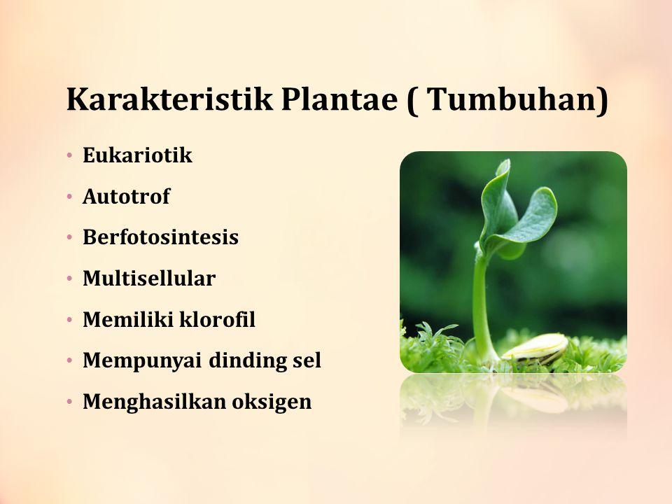 Karakteristik Plantae ( Tumbuhan) Eukariotik Autotrof Berfotosintesis Multisellular Memiliki klorofil Mempunyai dinding sel Menghasilkan oksigen