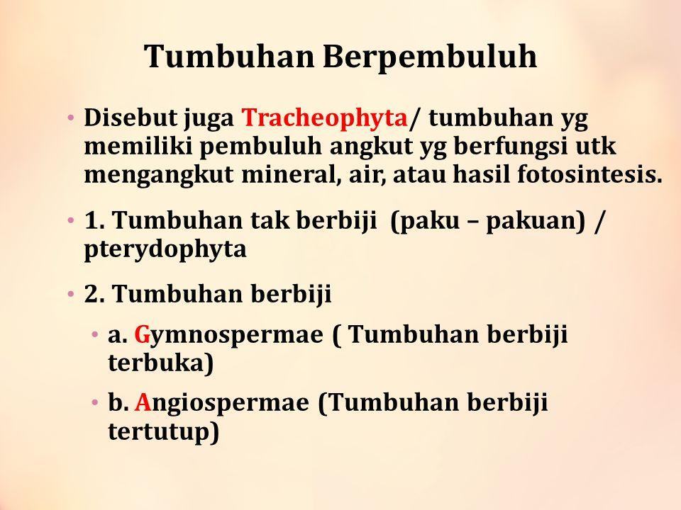 Tumbuhan paku (Pterydophyta) Ciri – ciri : a.Habitat di tempat yg teduh, lembab atau basah.