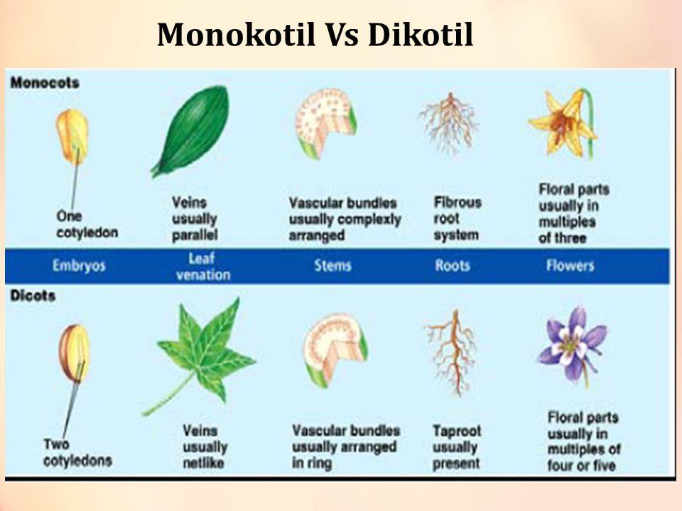 Daun (monokotil x dikotil) Tulang daun sejajar Tulang daun menyirip dan menjari