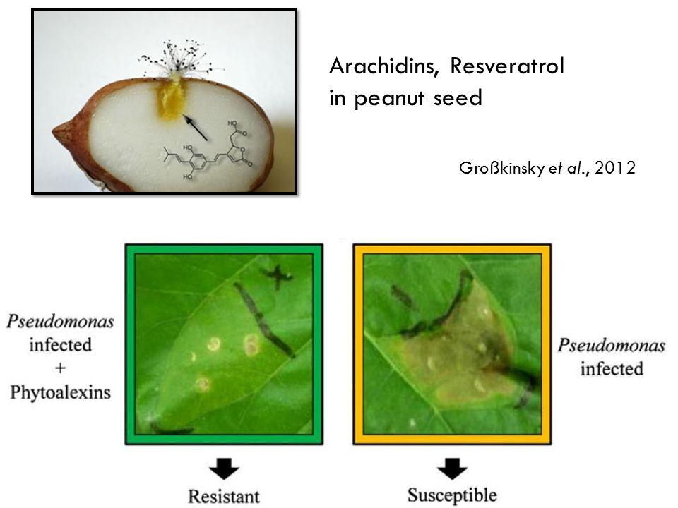 Arachidins, Resveratrol in peanut seed Großkinsky et al., 2012